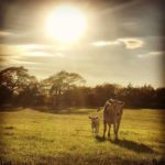 Late afternoon in the Pasture