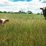 Hide and seek in the Pasture