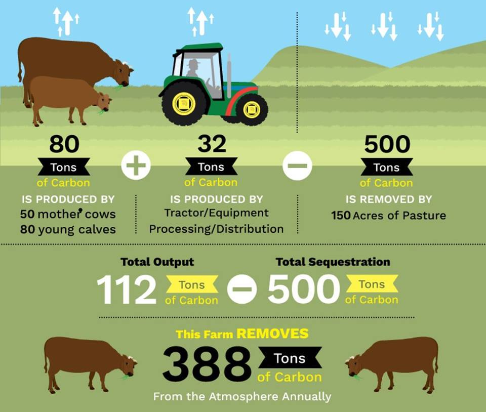 The impact of dairy farming carbon sequestration on greenhouse gas emissions