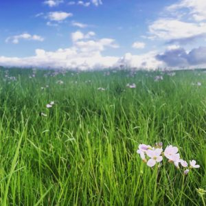 Mossgiel Organic Farm - Flowers In The Pasture