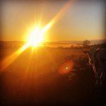 Sunset at Mossgiel Organic Farm